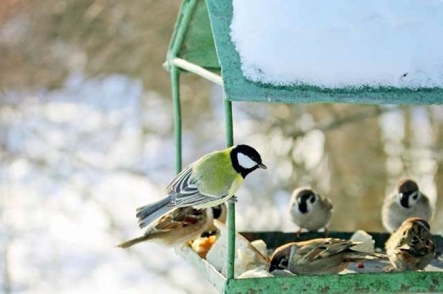 Come attirare gli uccelli nelle tue mangiatoie in inverno